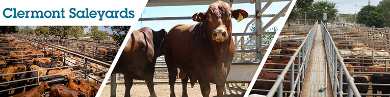 Clermont Saleyards - Check out when the next Cattle Sale is on